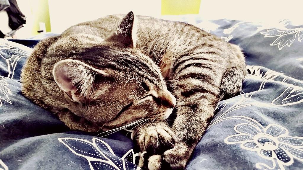 睡眠のススメ。睡眠不足と経済損失